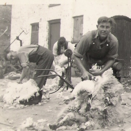 joe and will shearing at Blaenycwm.021011